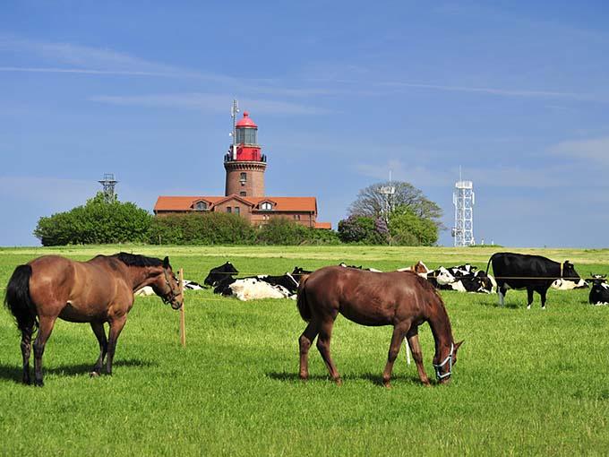 Pferde am Leuchtturm BUK